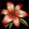 Alpine Lily[pl:
